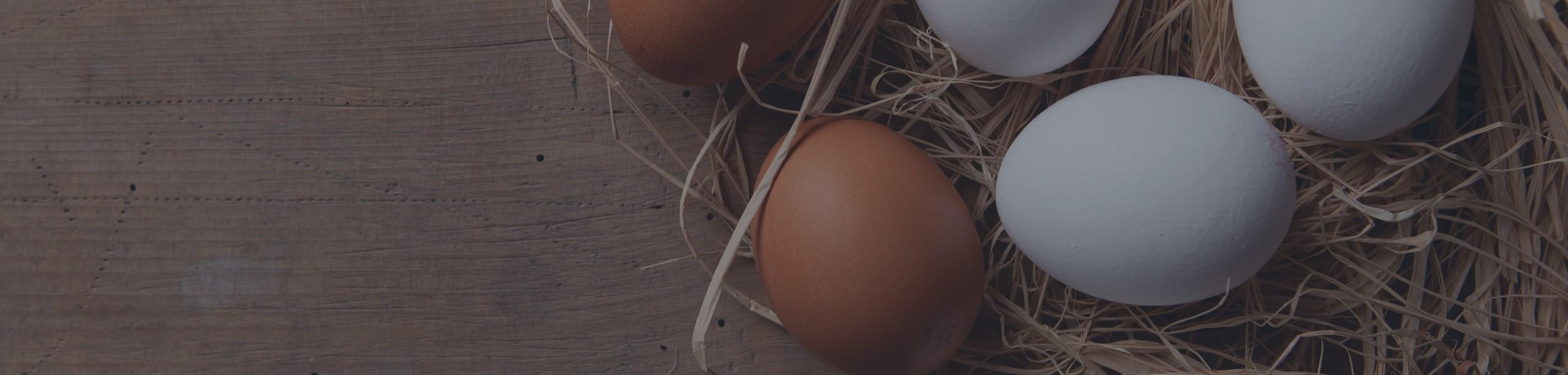 Eggs1-3