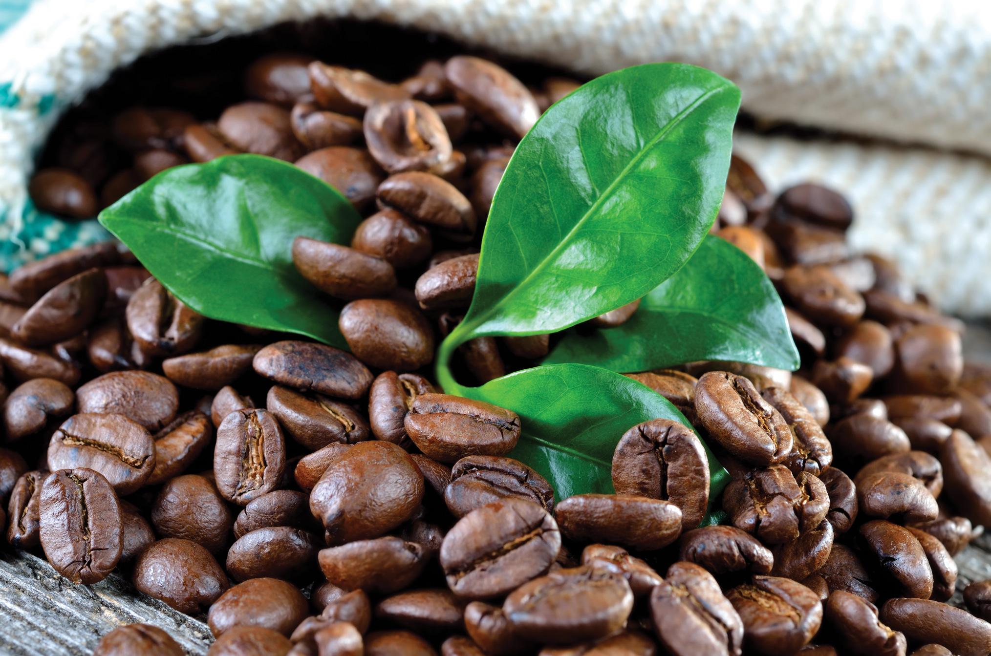 Fotolia_41827872_XXL_coffee_beans-1