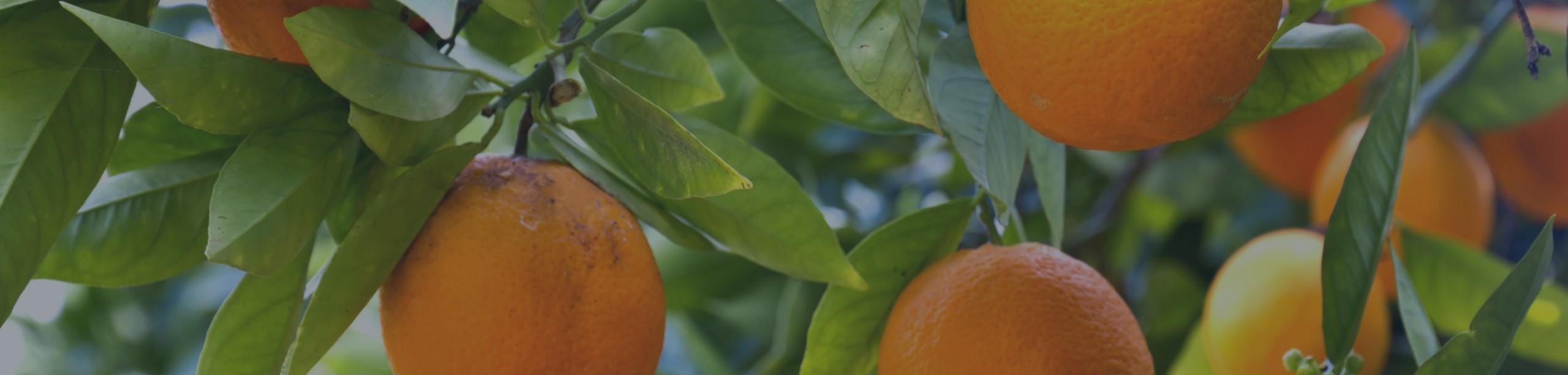Orange1-5