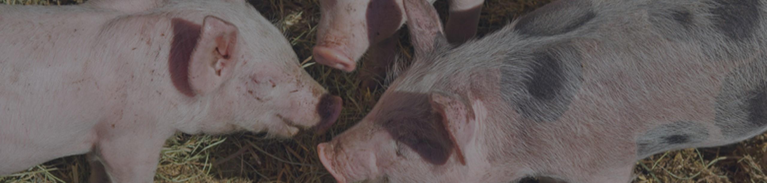 Pork2-3